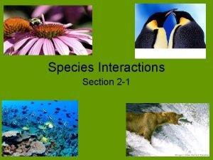 Species Interactions Section 2 1 Species Interactions Species