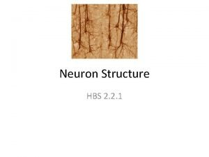 Neuron Structure HBS 2 2 1 Neurons Neurons