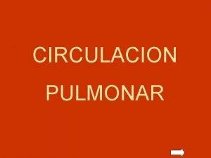 CIRCULACION PULMONAR CIRCULACION PULMONAR VASOS EXTRAALVEOLARES DEPENDENCIA DEL