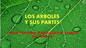 LOS ARBOLES Y SUS PARTES HECHO POR PIERO