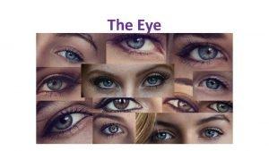 The Eye Extrinsic Eye Muscles Six skeletal muscles