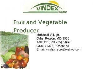 Fruit and Vegetable Producer Malaiesti Village Orhei Region