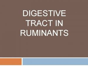 DIGESTIVE TRACT IN RUMINANTS Ruminants Reticulum rumen omasum