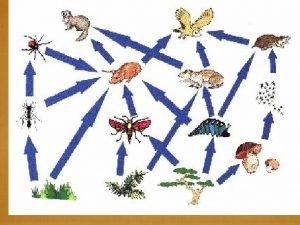 Energy Flow Through Ecosystems energy pyramids biomass pyramids