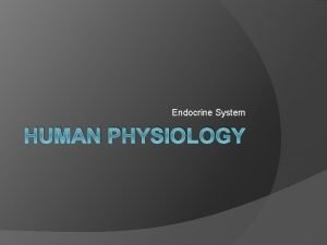 Endocrine System HUMAN PHYSIOLOGY Endocrine System Overview Works