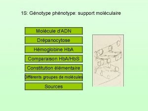 1 S Gnotype phnotype support molculaire Molcule dADN