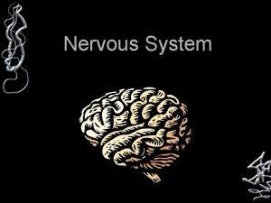 Nervous System Parts of the Nervous System Brain