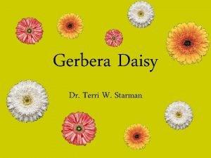 Gerbera Daisy Dr Terri W Starman History Discovered