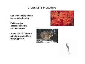 DJURRIKETS INDELNING Djur finns i mnga olika former