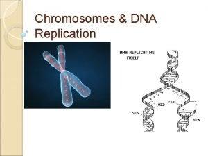 Chromosomes DNA Replication DNA Chromosomes Prokaryotes circular chromosomes