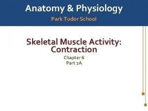 Anatomy Physiology Park Tudor School Skeletal Muscle Activity