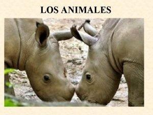 LOS ANIMALES Existen muchas clases de animales algunos