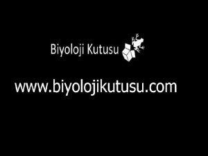 BTK BYOLOJS Bitkilerin Yaps Mg2 Su Karbondioksit Fe2