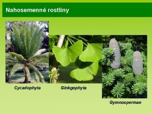 Nahosemenn rostliny Cycadophyta Ginkgophyta Gymnospermae Nahosemenn rostliny deviny