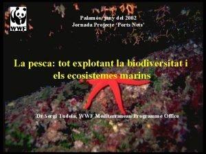 Palams juny del 2002 Jornada Projecte Ports Nets