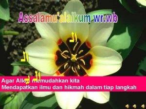 Agar Alloh memudahkan kita Mendapatkan ilmu dan hikmah