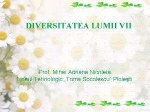 DIVERSITATEA LUMII VII Prof Mihai Adriana Nicoleta Liceul