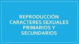 REPRODUCCIN CARACTERES SEXUALES PRIMARIOS Y SECUNDARIOS PUBERTAD Pubertad