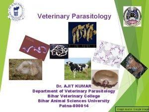 Veterinary Parasitology Dr AJIT KUMAR Department of Veterinary