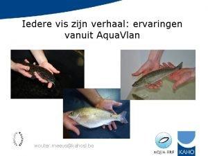 Iedere vis zijn verhaal ervaringen vanuit Aqua Vlan