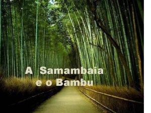 A Samambaia e o Bambu Certo dia decidi