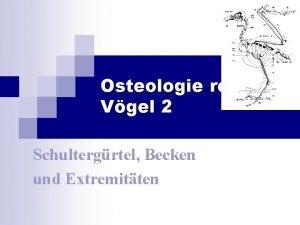 Osteologie rezenter Vgel 2 Schultergrtel Becken und Extremitten