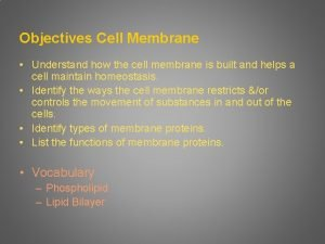 Objectives Cell Membrane Understand how the cell membrane
