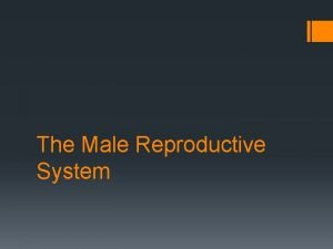 The Male Reproductive System The Male Reproductive System