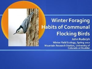 Winter Foraging Habits of Communal Flocking Birds John