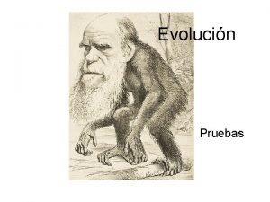 Evolucin Pruebas Pruebas de la Evolucin Pruebas Paleontolgicas