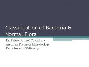 Classification of Bacteria Normal Flora Dr Zaheer Ahmed
