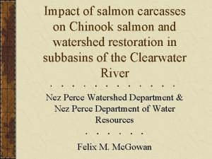 Impact of salmon carcasses on Chinook salmon and