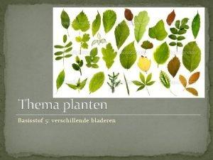 Thema planten Basisstof 5 verschillende bladeren Doelen Je