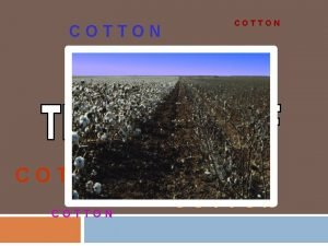 COTTON COTTON How do they make Jeans Sheets