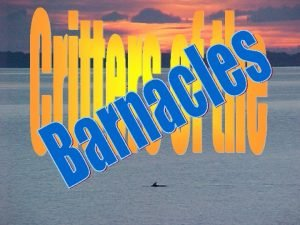 What is a Barnacle You may have seen