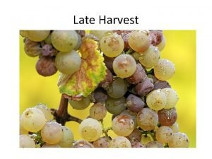 Late Harvest Late harvest is a term applied