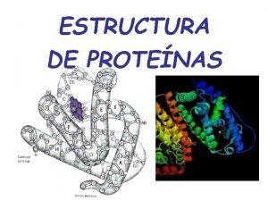 ESTRUCTURA DE PROTENAS Protenas Biopolmeros 50 peso seco