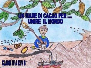 La pianta del cacao Il cacao Theobroma cacao