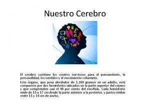 Nuestro Cerebro El cerebro contiene los centros nerviosos