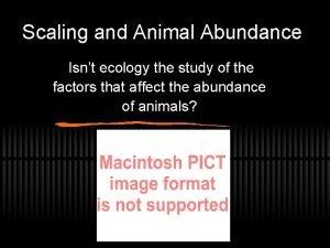 Scaling and Animal Abundance Isnt ecology the study