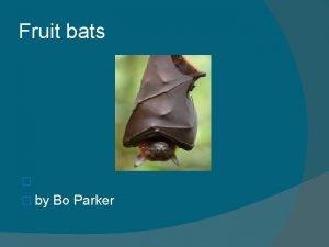 Fruit bats by Bo Parker DIET Diet 70
