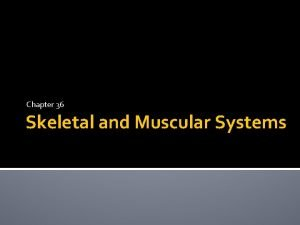 Chapter 36 Skeletal and Muscular Systems Skeletal System