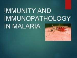 IMMUNITY AND IMMUNOPATHOLOGY IN MALARIA Pthogenesis of Malaria