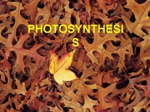 PHOTOSYNTHESI S A Big Picture Review Whats needed