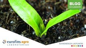 El Magnesio en el suelo y plantas El