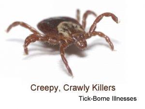 Creepy Crawly Killers TickBorne Illnesses Tick Identification Lyme
