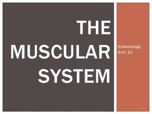 THE MUSCULAR SYSTEM Kinesiology Unit 10 1 THE