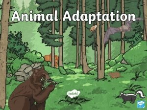 What Is Adaptation Adaptation is the process of