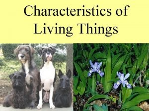 Characteristics of Living Things 1 Living things are