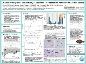 Ovarian development and maturity of Southern Flounder in